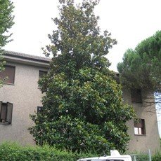 Rent 2 rooms a Monza